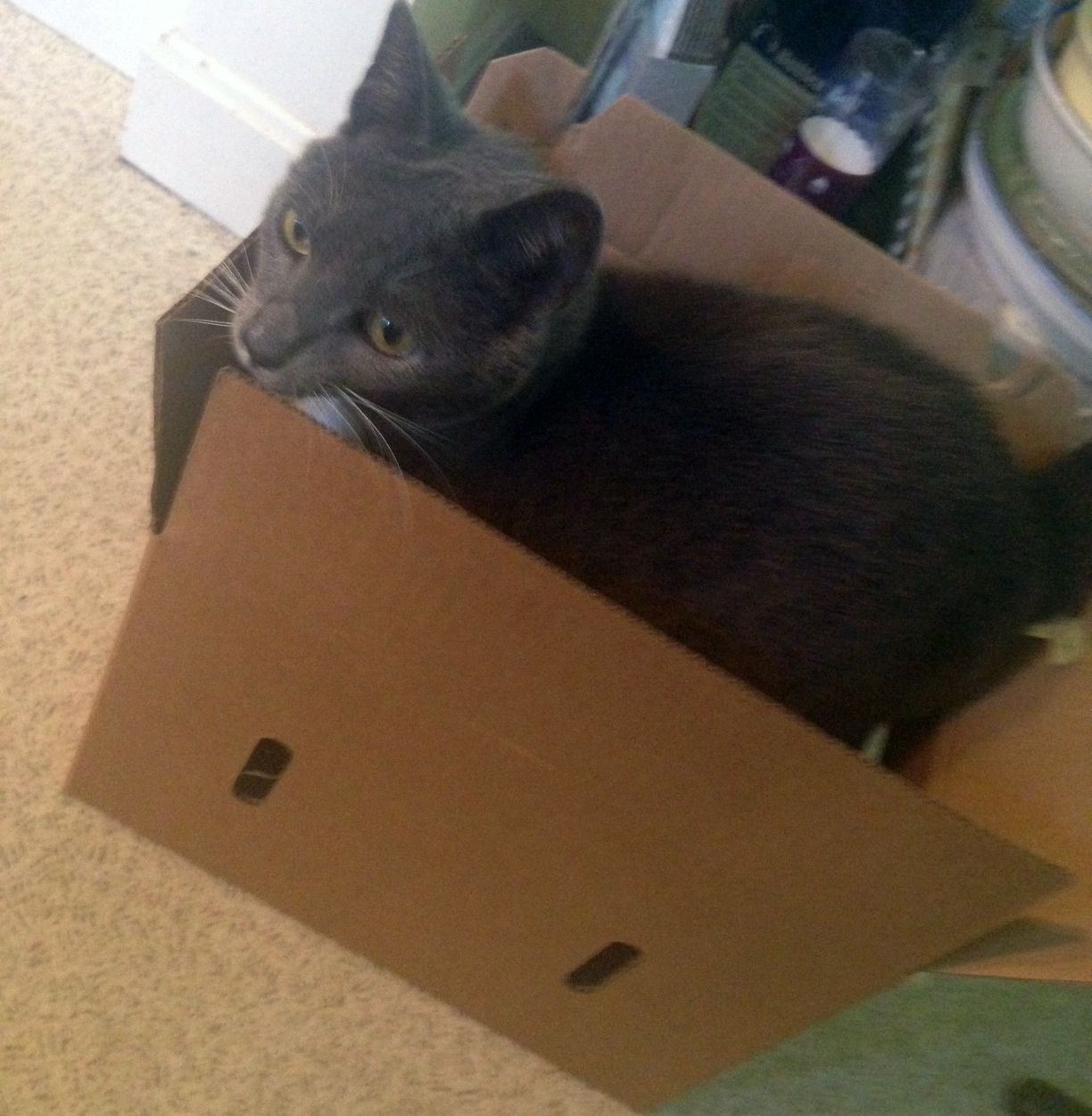 Chet can't resist a box.