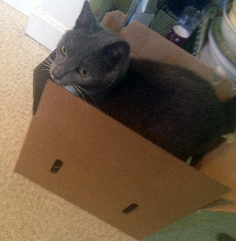 Chet can't resist a box.