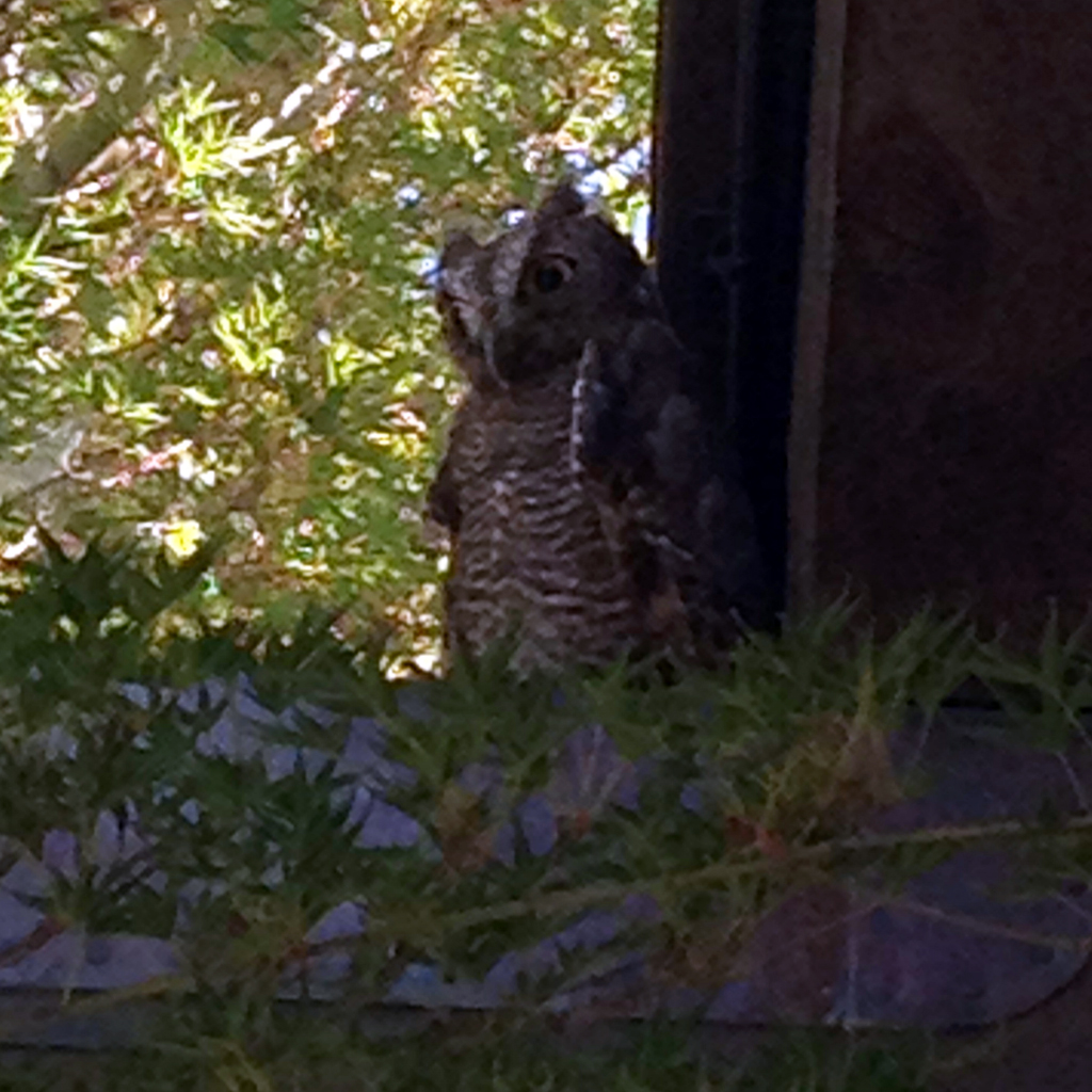 This baby owl greeted us at the Arista tasting room!