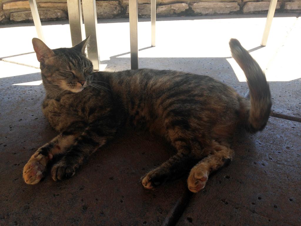 Greta, the winery cat at Gary Farrell.