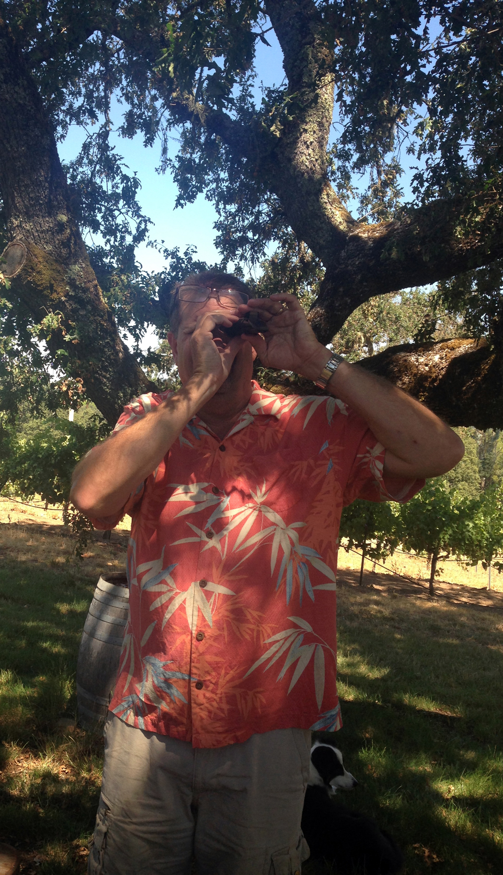 John MacLeod checks the sugar content, or brix level, of the SB grapes with a refractometer.