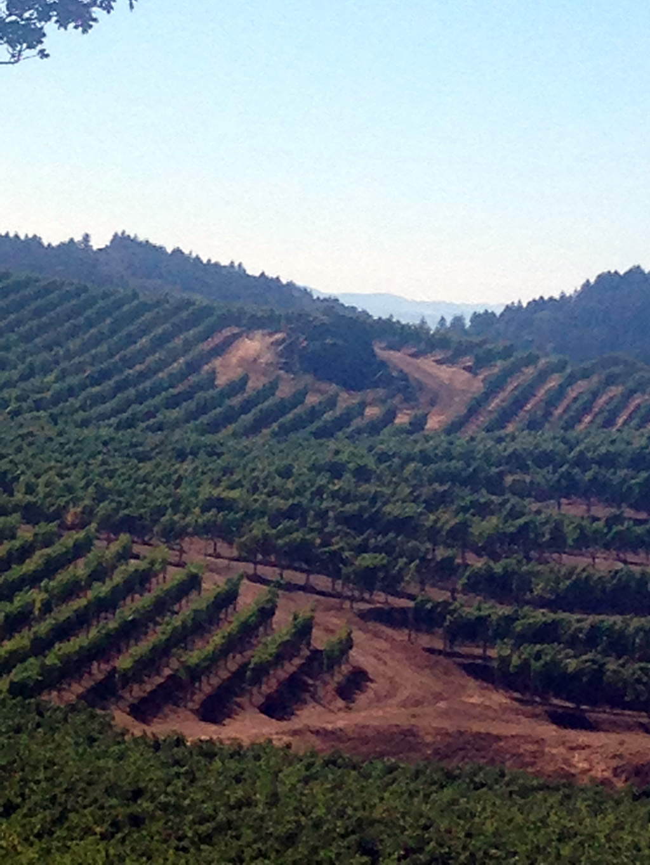 Pride Mountain Vineyards in the Spring Mountain AVA. Half the vineyards are in Napa County, half in Sonoma.