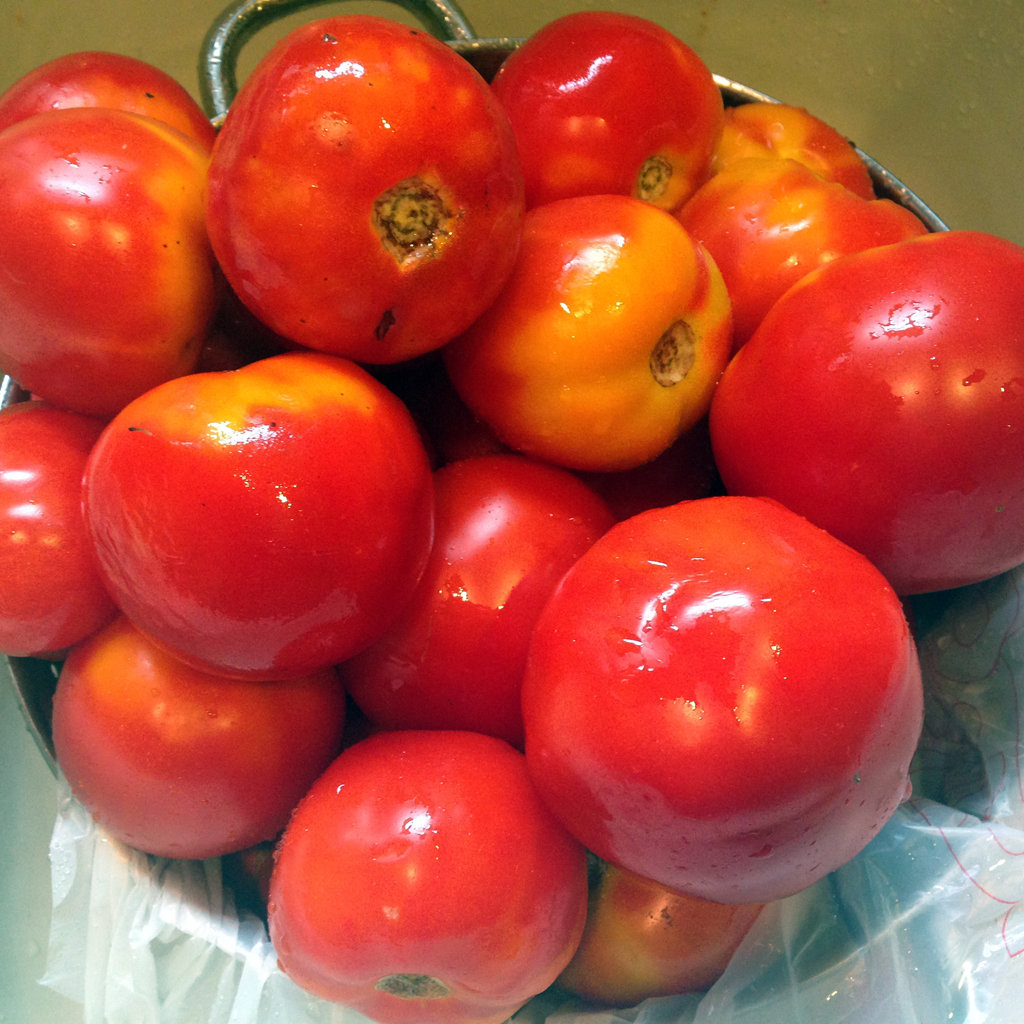 Tomatoes will become sauce, soup, and ketchup that I will likely beg friends and acquaintances to take.