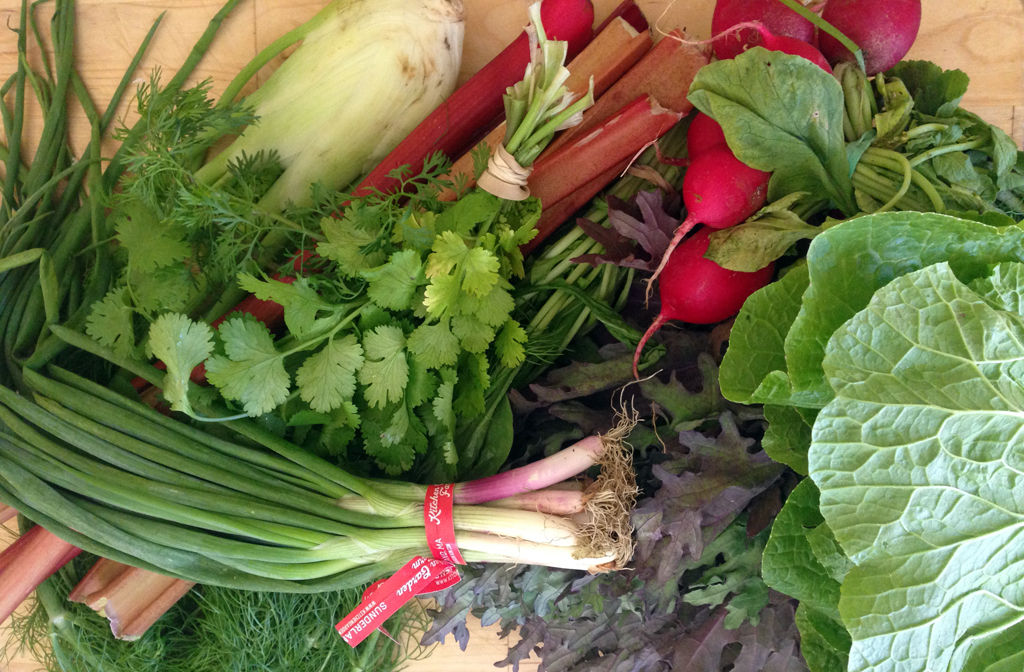 Green & red: Christmas in June! Fennel, rhubarb, cilantro, scallions, radishes, red Russian kale, arugula, Napa cabbage.