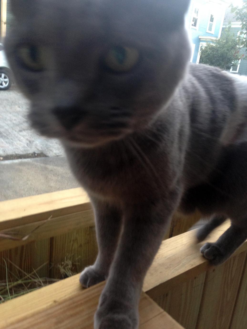 Kitty action shot!